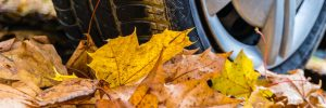 Car driving over leaves